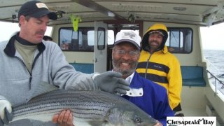 Chesapeake Bay Trophy Rockfish #14