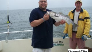 Chesapeake Bay Nice Rockfish 2 #29