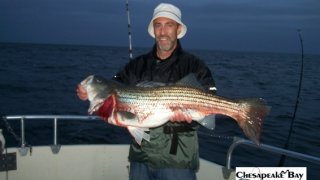 Chesapeake Bay Trophy Rockfish 4 #63