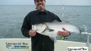 Chesapeake Bay Trophy Rockfish 3 #22