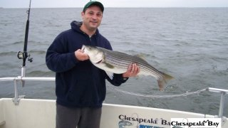 Chesapeake Bay Nice Rockfish #10