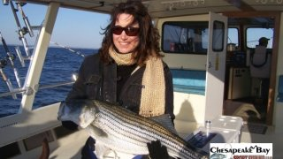 Chesapeake Bay Trophy Rockfish 4 #10
