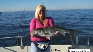 Chesapeake Bay Trophy Rockfish 4 #28