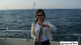 Chesapeake Bay Nice Rockfish 2 #8