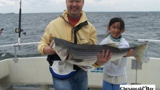Chesapeake Bay Trophy Rockfish #7
