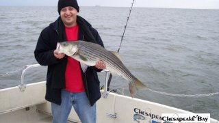 Chesapeake Bay Nice Rockfish #9