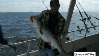 Chesapeake Bay Nice Rockfish #8