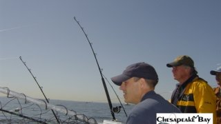 Chesapeake Bay Action Shots 2 #28