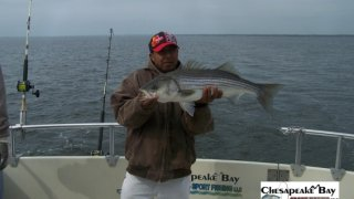 Chesapeake Bay Nice Rockfish 3 #22