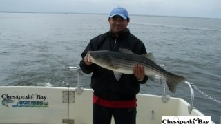 Chesapeake Bay Trophy Rockfish 4 #61