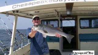 Chesapeake Bay Nice Rockfish #15