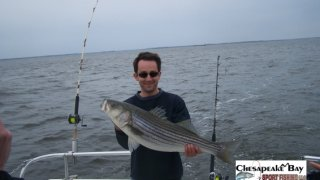 Chesapeake Bay Nice Rockfish 3 #1