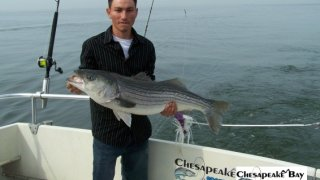 Chesapeake Bay Trophy Rockfish #31