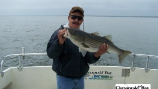 Chesapeake Bay Trophy Rockfish 4 #60