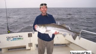 Chesapeake Bay Trophy Rockfish 4 #64