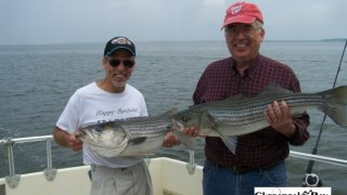 Chesapeake Bay Nice Rockfish 2 #27