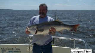 Chesapeake Bay Trophy Rockfish 3 #18