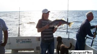 Chesapeake Bay Nice Rockfish 2 #25