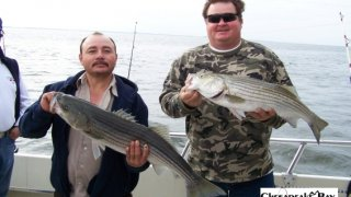 Chesapeake Bay Nice Rockfish #23