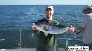 Chesapeake Bay Trophy Rockfish 4 #21