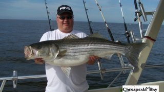 Chesapeake Bay Trophy Rockfish 3 #15