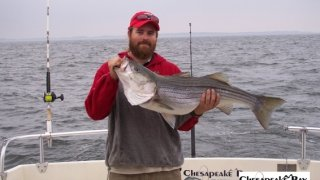 Chesapeake Bay Trophy Rockfish 4 #68