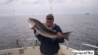 Chesapeake Bay Trophy Rockfish 4 #38