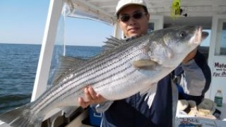 Chesapeake Bay Trophy Rockfish #4