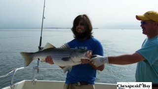 Chesapeake Bay Trophy Rockfish 2 #15