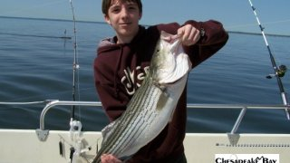 Chesapeake Bay Trophy Rockfish 2 #6