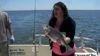 Chesapeake Bay Nice Rockfish 2 #37