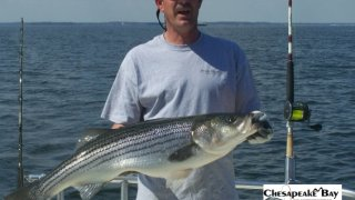 Chesapeake Bay Trophy Rockfish 4 #1
