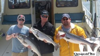 Chesapeake Bay Nice Rockfish 3 #20