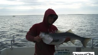 Chesapeake Bay Trophy Rockfish 4 #56