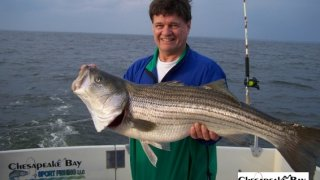 Chesapeake Bay Trophy Rockfish 4 #70