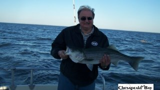 Chesapeake Bay Nice Rockfish 3 #10