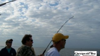 Chesapeake Bay Action Shots 2 #16