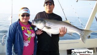 Chesapeake Bay Trophy Rockfish #18