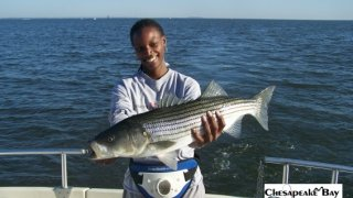 Chesapeake Bay Trophy Rockfish 4 #22