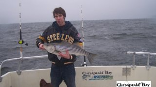 Chesapeake Bay Trophy Rockfish 4 #6