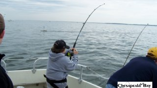 Chesapeake Bay Action Shots #31