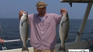 Chesapeake Bay Nice Rockfish 2 #3