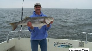 Chesapeake Bay Trophy Rockfish 2 #1