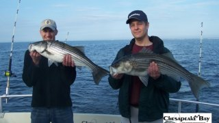 Chesapeake Bay Nice Rockfish 3 #2