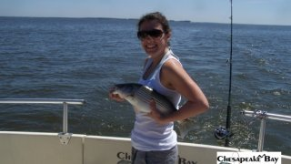 Chesapeake Bay Nice Rockfish 2 #36