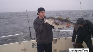 Chesapeake Bay Trophy Rockfish 4 #7