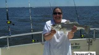 Chesapeake Bay Nice Rockfish 2 #40