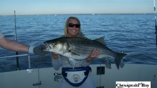 Chesapeake Bay Trophy Rockfish 4 #27