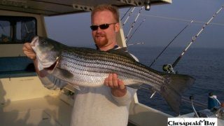 Chesapeake Bay Trophy Rockfish #27