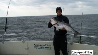 Chesapeake Bay Trophy Rockfish 3 #3
